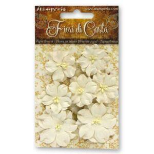 Szárazvirág szett: 7 fehér virág