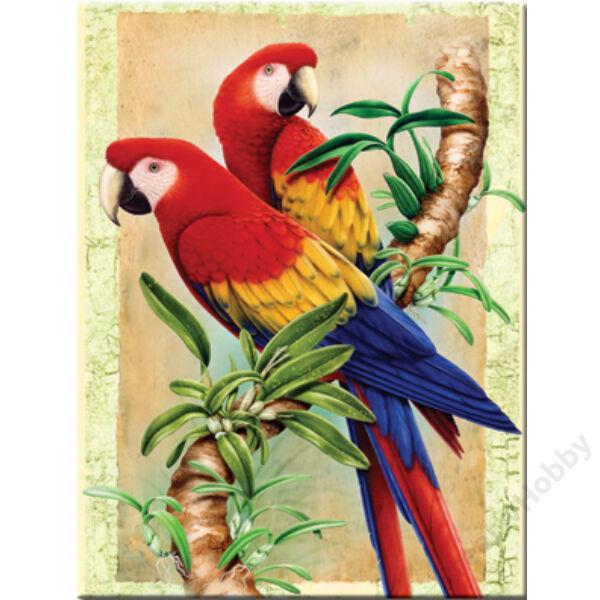 Számozott kifestő, 222,3*298,5mm - Papagájok