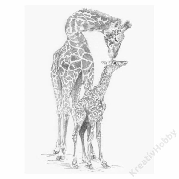 Grafikai készlet - Zsiráfok