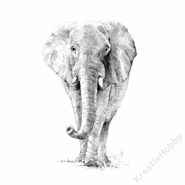 Graf. készlet, normál, 222,3x298,5mm - Elefánt