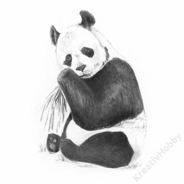 Grafikai készlet - Panda