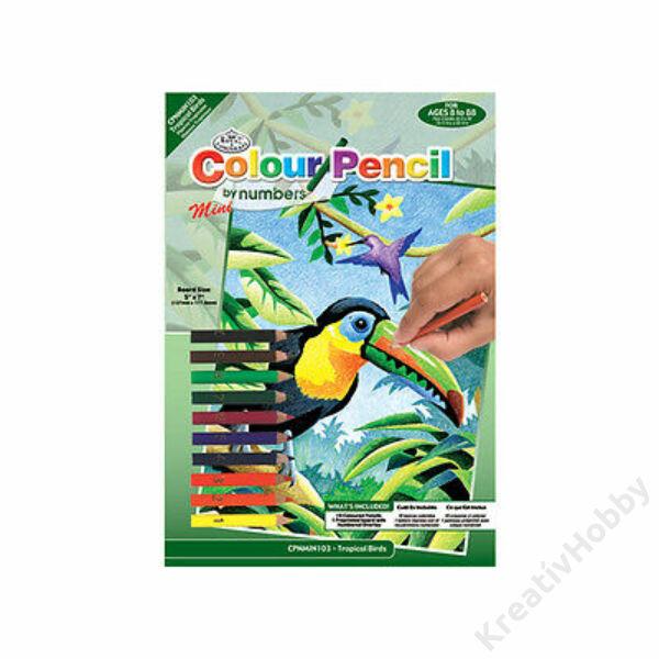 Számozott kifestő, 127*178mm - Trópusi madár
